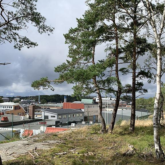 Grönstruktur i Högsbo-Frölunda