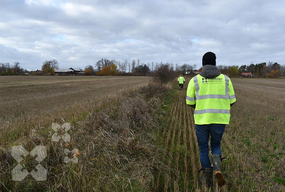 Rådhusets ekologer bevakar naturvärden i planeringen